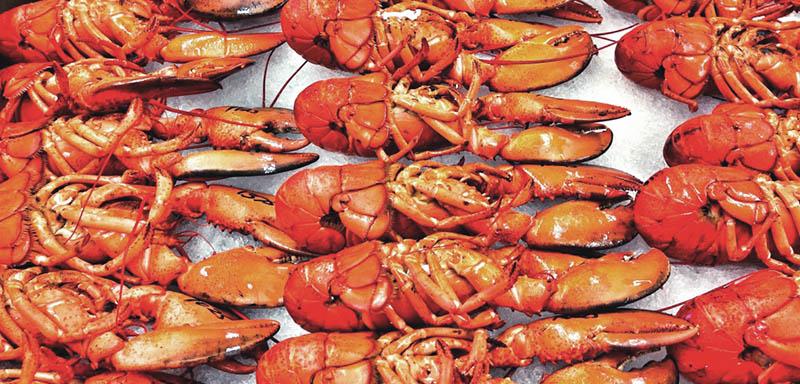 pei-lobsters